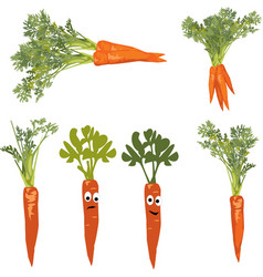 carrot with a face objects on white background vector image