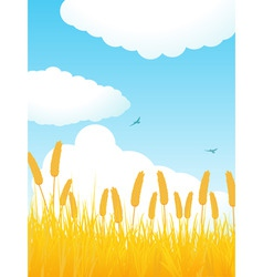 field of corn against a blue sky with fluffly clou vector image