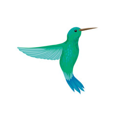 Hummingbird tiny colibri with bright turquoise vector