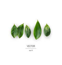 realistic leaf icons vector image