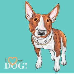 smiling cartoon Bull Terrier Dog breed vector image
