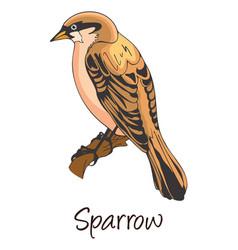 Sparrow color vector