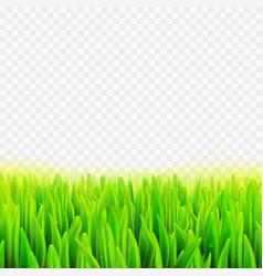 Stock realistic macro grass vector