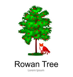Cartoon isolated rowan summer tree on a white vector