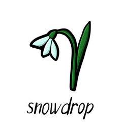 flower of snowdrop vector image