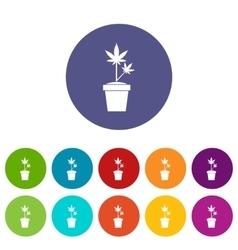 Hemp in pot set icons vector image