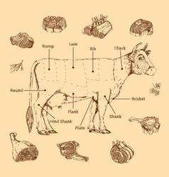 Meat hand drawn scheme vector