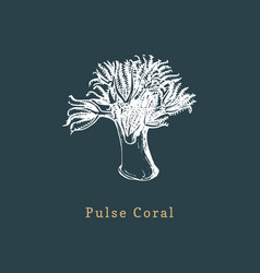 pulse coral drawing of sea vector image
