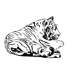 Resting bengal tiger vector image