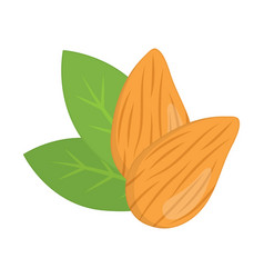 almonds nuts vector image