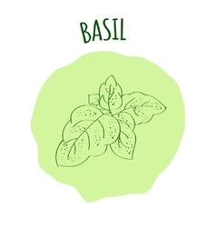 Basil branch vector