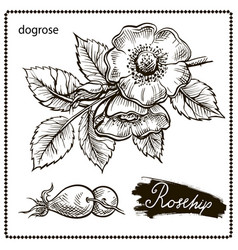 Dogrose vector