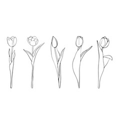 hand drawn tulips sketch vector image