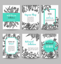 set card with hand drawn herbs and wild flowers vector image