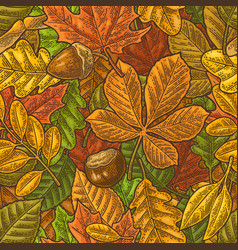 seamless pattern leafs acorn chestnut and seed vector image vector image