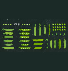 black board peeled green pea pod big set vector image