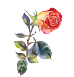 Bright rose watercolor vector