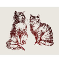 Cats sketch vector