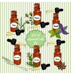 essential oils set 5 vector image