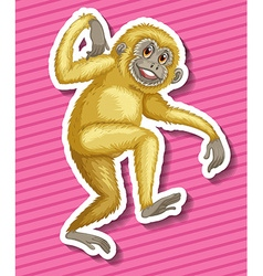 Gibbon vector image