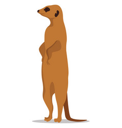 Meerkat animal on white background vector