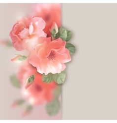 Card with flowers roses vector image vector image