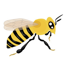 Bee icon on a white background insect vector