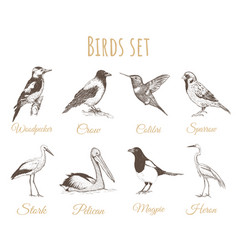 birds set sketch vector image