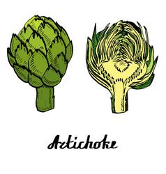 Coloured artichoke poster vector