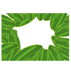 frame green plumeria leaf isolated on white vector image