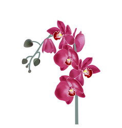 With pink orchids digital vector