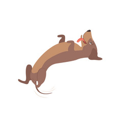 purebred playful brown dachshund dog lying on his vector image