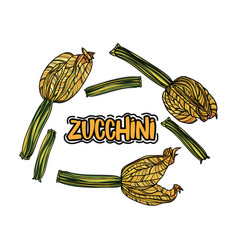 Set with zucchini vector