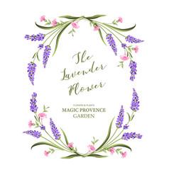 Elegant card with lavender flowers vector