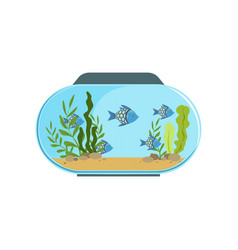 Aquarium in round shape with blue exotic fishes vector