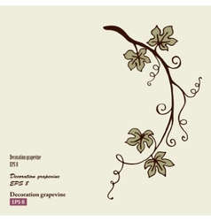Decoration grape vine vector image