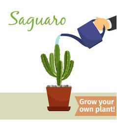 hand watering saguaro plant vector image vector image