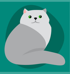 cat breed siberian cute pet portrait fluffy gray vector image vector image
