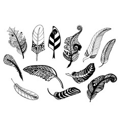 hand drawn whimsical feather collection vector image