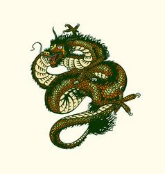 Japanese dragon mythological animal or asian vector