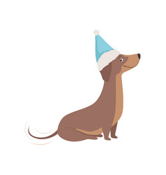 Purebred brown dachshund dog in a blue santa hat vector
