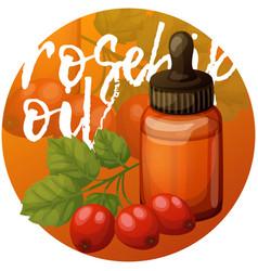Rosehip oil and berries essential vector