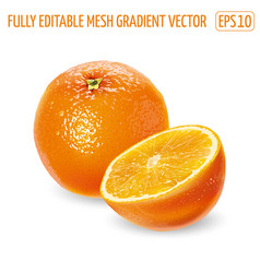 Whole orange with a cut half on a white background vector