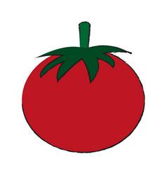 healthy fresh vegetable vector image vector image