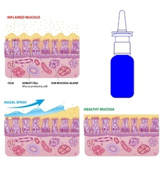 Nasal mucosa cells and micro cilia scheme vector image vector image