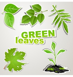 set sticker green leaves vector image vector image