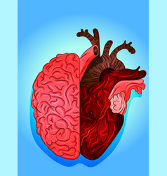 heart and brain art drawing vector image