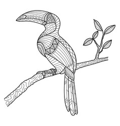Hornbill coloring page hand drawn vector