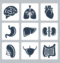internal organs icons set vector image