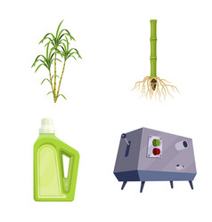 Sugarcane and cane symbol vector
